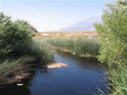 View of the Owens River near Bishop, California